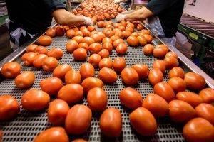 Website photography for Scott Street Tomato